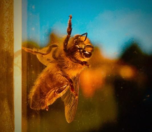 The Bee: LizianEvents Ltd