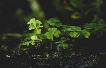 green plants on black soil