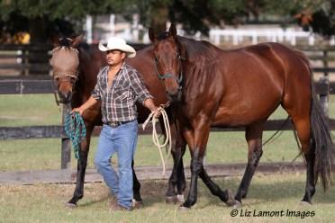 Galloping Dancer and Savannah
