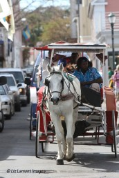 Carriage rides in downtown Nassau
