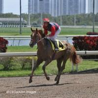 Invasora (FL) with jockey Edgard Zayas returns from race