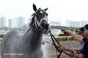 Live Lively (KY) getting cooled down after her first race of the year
