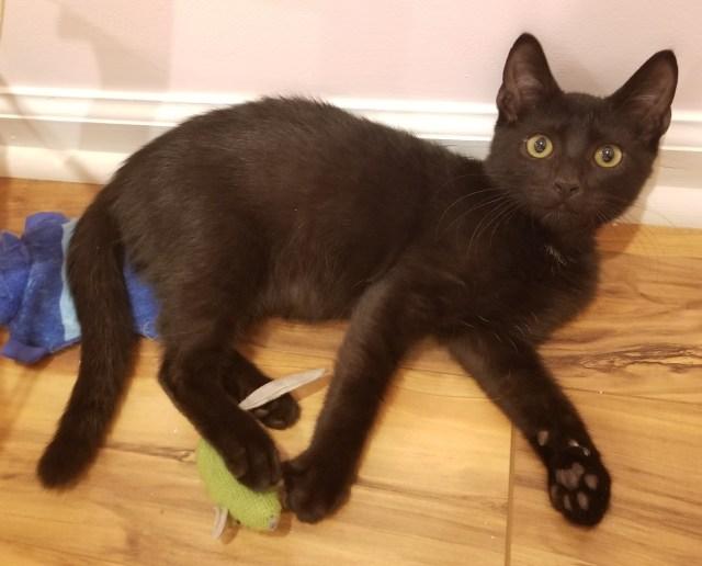Black kitten.