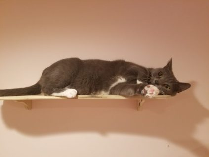 Gray and white cat on wall shelf.
