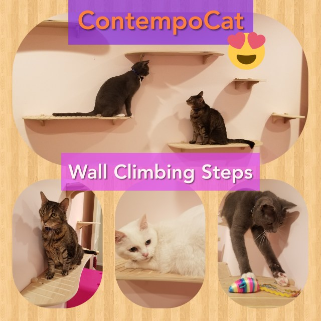 Cats on cat shelves