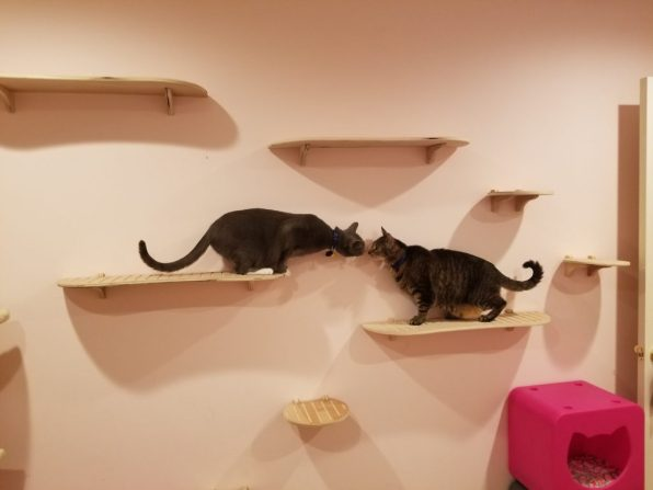 Cats greet on ContempoCat wall steps