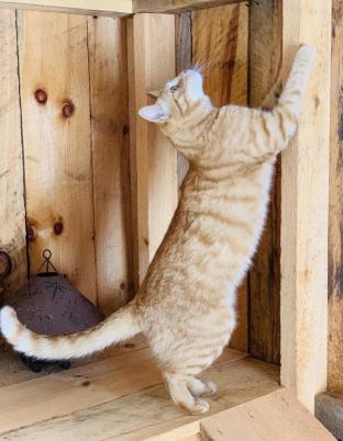 Orange cat in shed.
