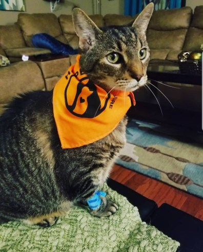 cat in bandana