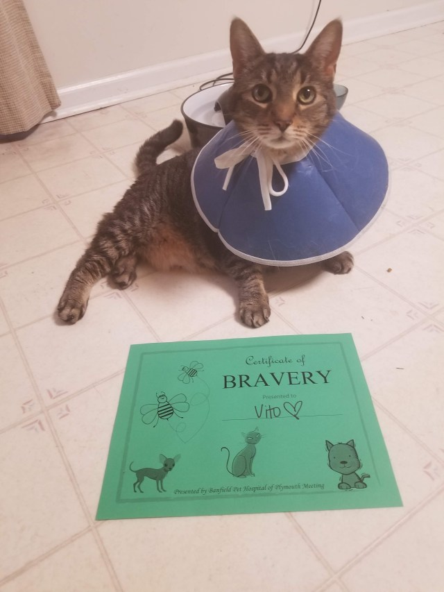 cat with certificate