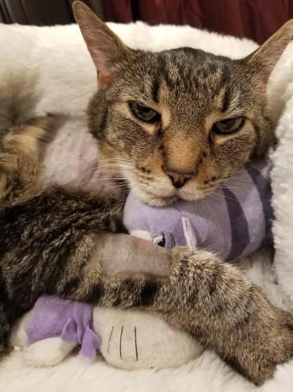 Cat hugs stuffed animal