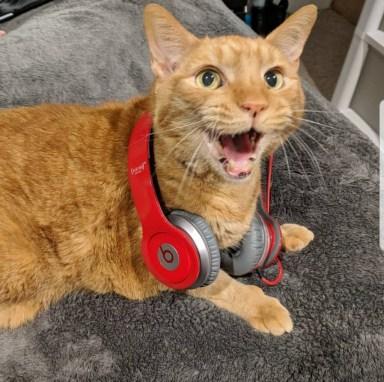 Orange tabby cat wearing red headphones.