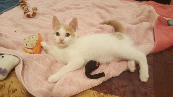 Kitten with toys.