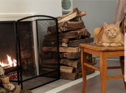 Orange tabby cat sitting by fireplace.