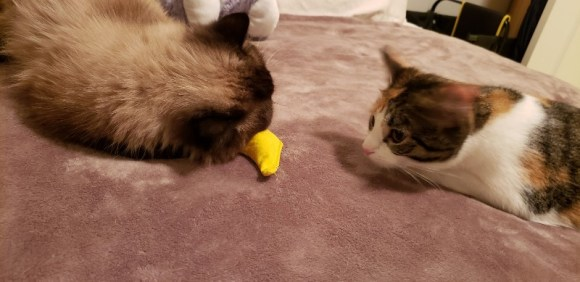 two cats with stuffed banana