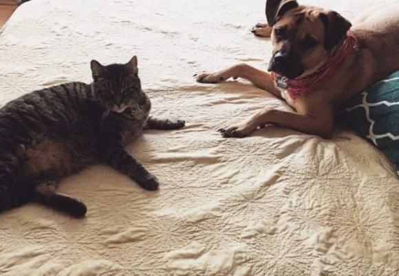 Tabby cat sitting with dog.