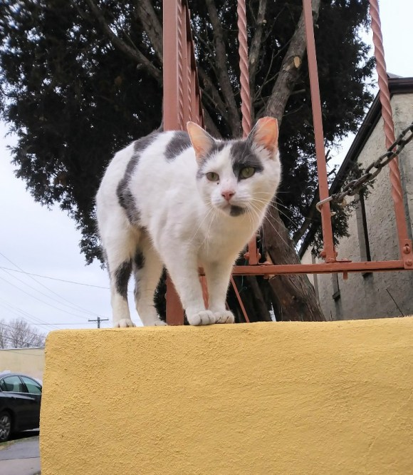 cat outside on yellow wall