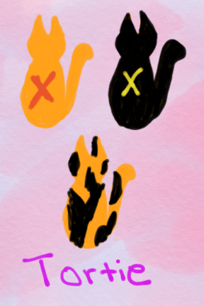 diagram of tortie cat genetics