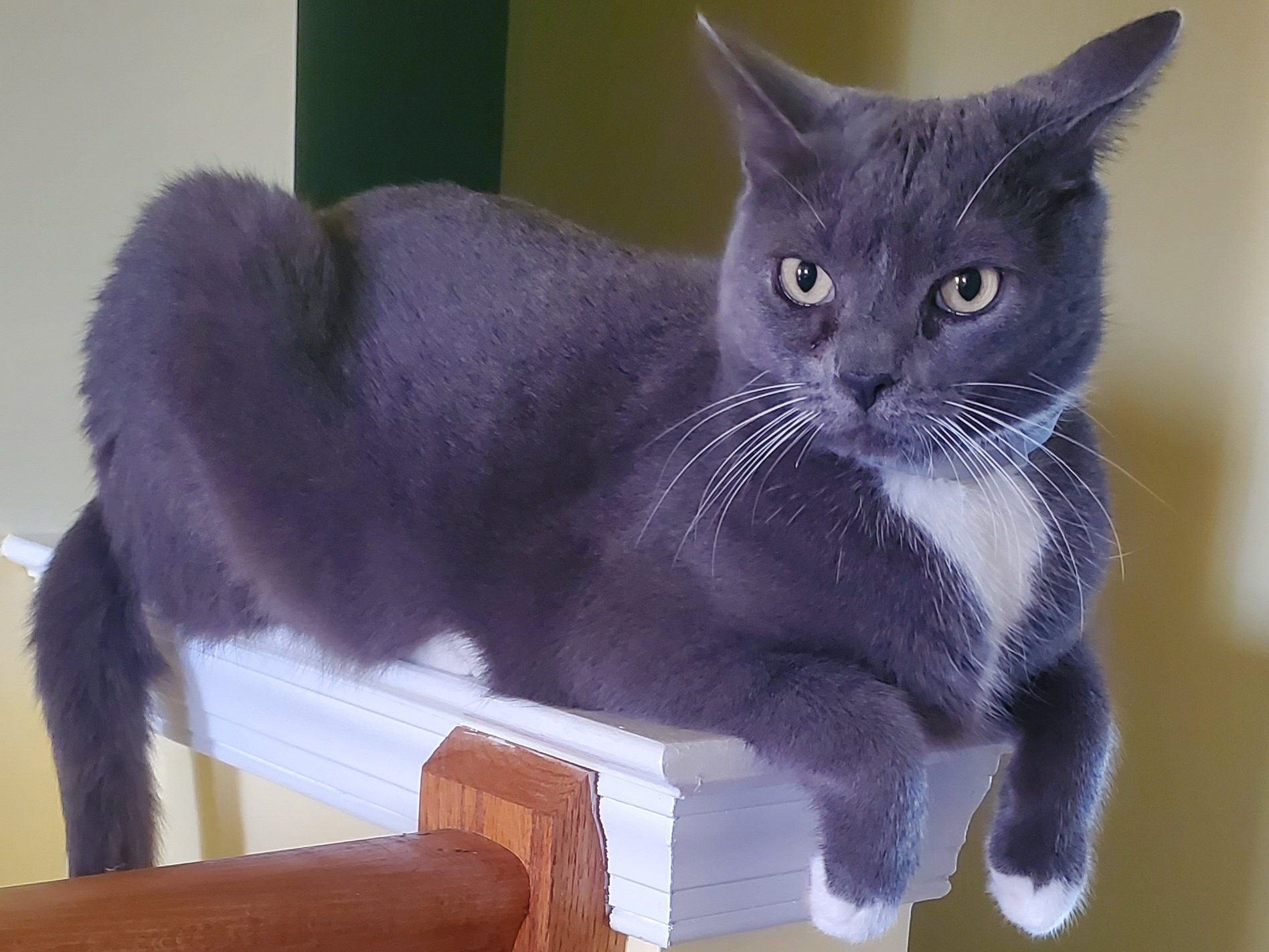gray and white cat on perch