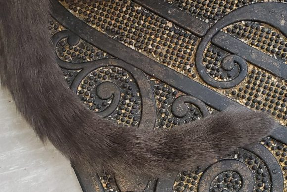 gray cat's striped tail