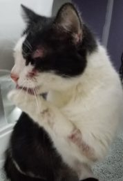 Visible sores and raw skin on Lucy's body from flea allergy dermatitis (FAD).