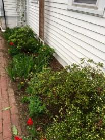 Sunny Side Garden