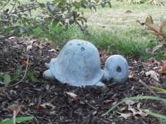 turtle spotting!