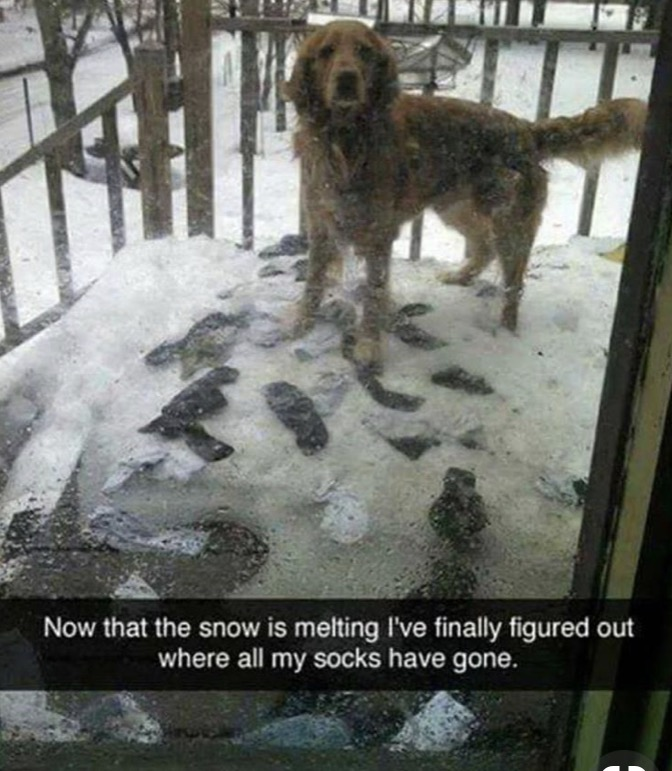 Dog socks.jpg