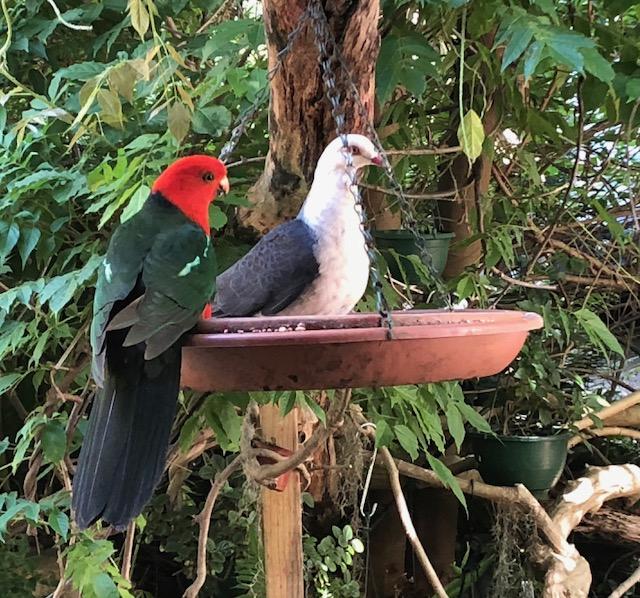 Birds from deck