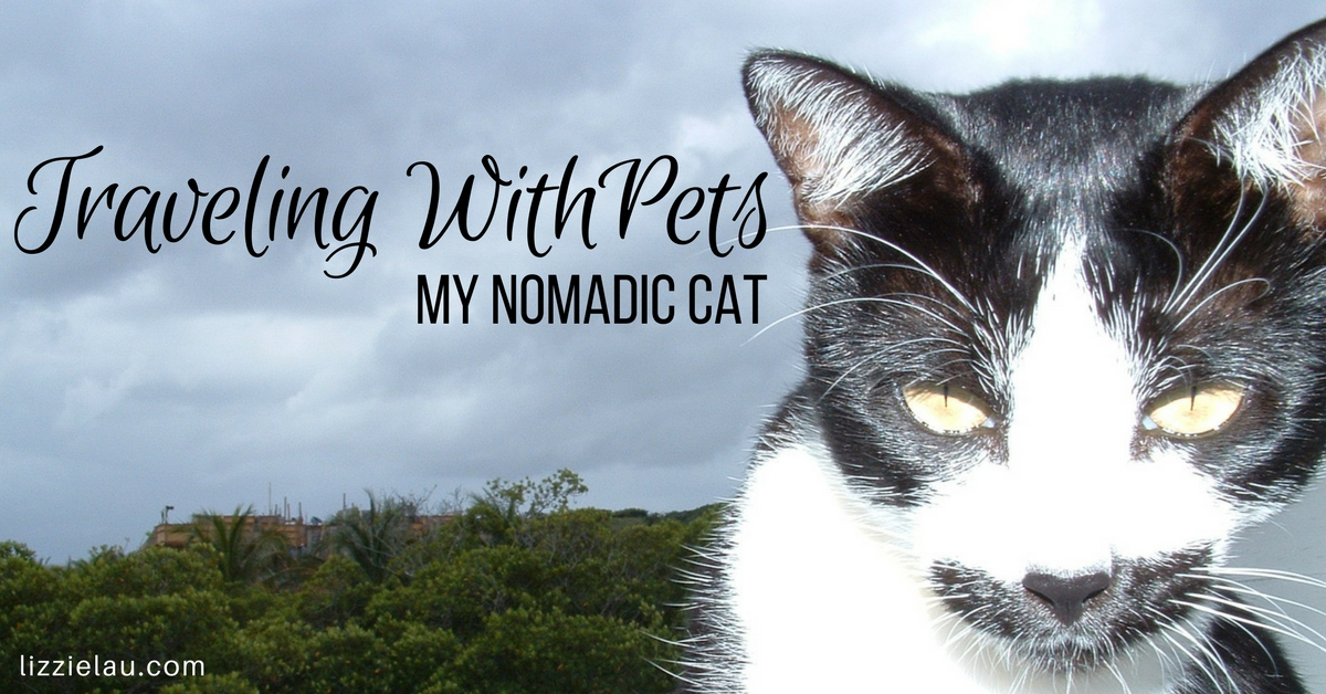 Traveling With Pets - my nomadic cat