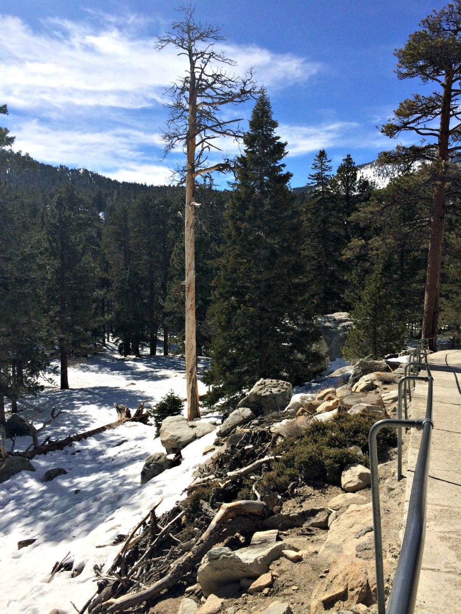Your Trip to the Coachella Valley Isn't Complete Without a Ride up the Palm Springs Aerial Tramway