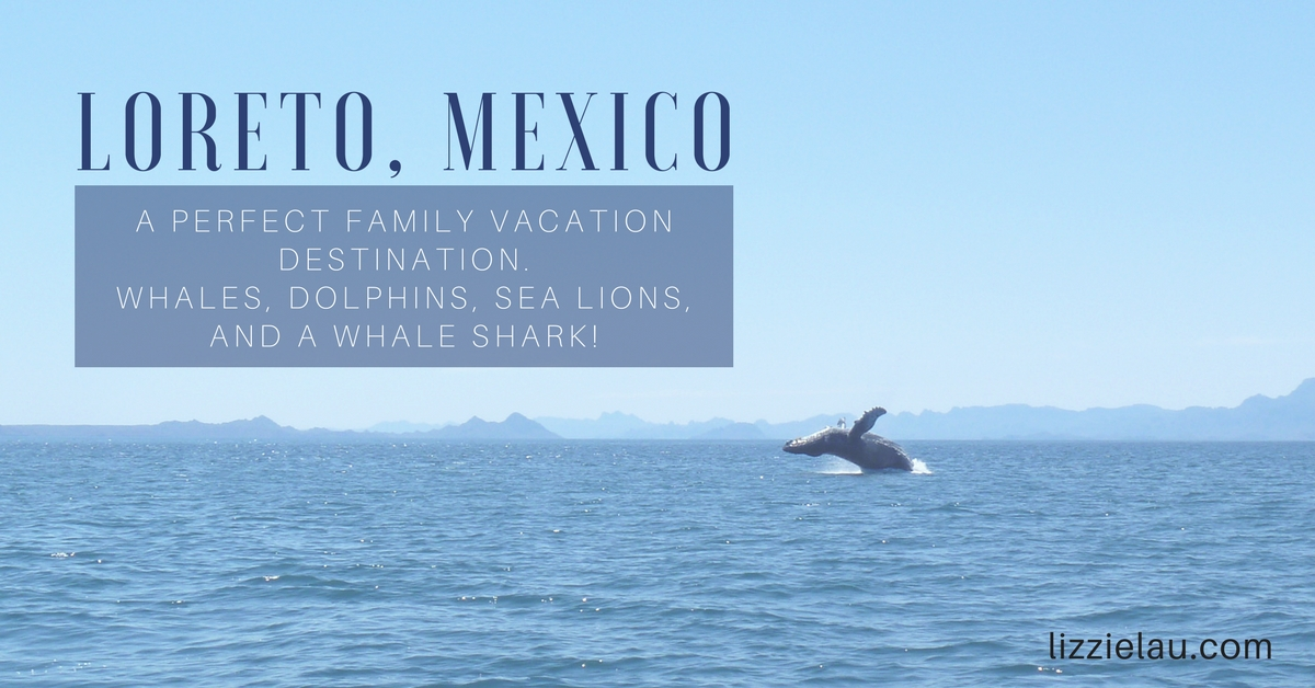 Loreto, Mexico – Whales, Dolphins, Sea Lions, and a Whale Shark!