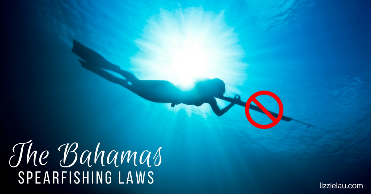 The Bahamas Spearfishing Laws - Lizzie Lau Travels