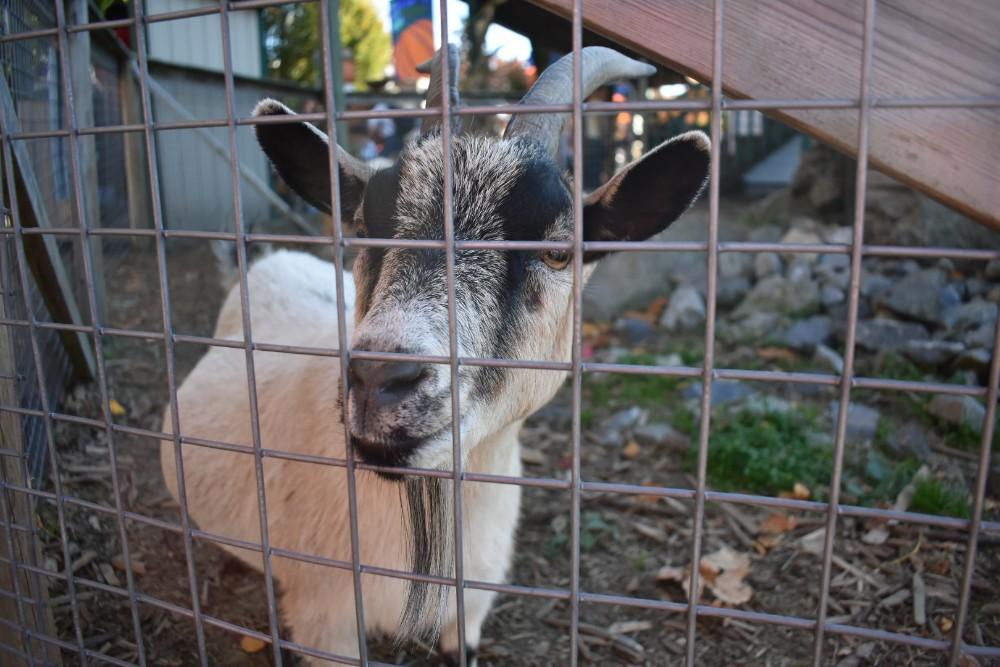 taves family farms applebarn