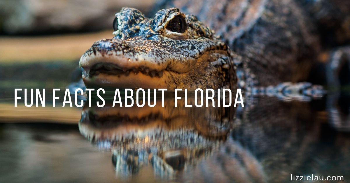 fun facts about florida aligator