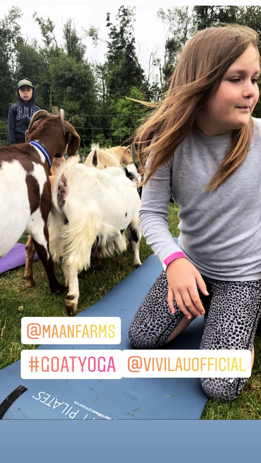 Goat Yoga World Record Attempt