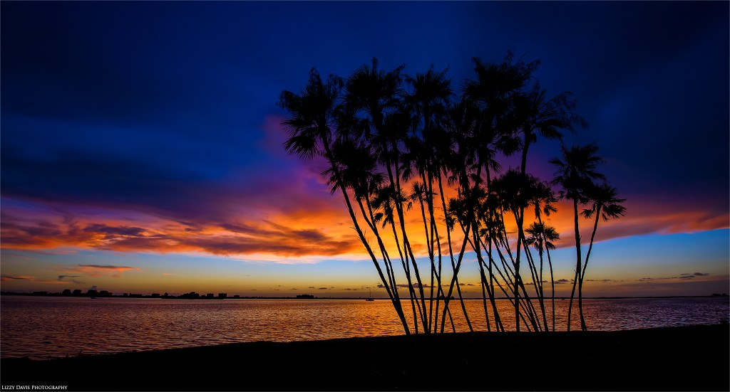 Palm trees at sunset by Clearwater, FL based photographer ©Lizzy Davis Photography.