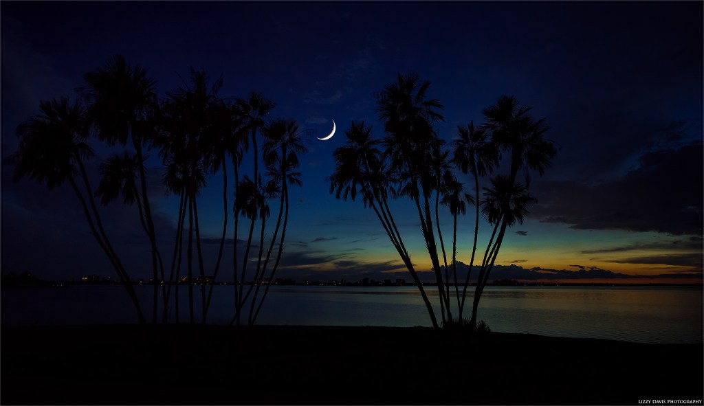 Photo of a crescent moon between palm trees at Edgewater Drive Park in Clearwater, FL. ©Lizzy Davis Photography
