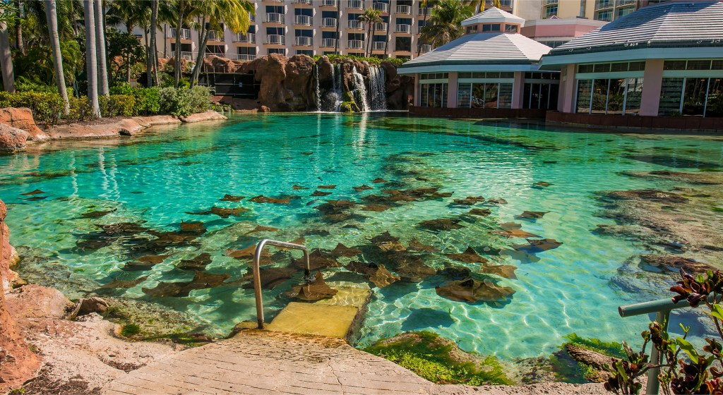 Stingray pond at Atlantis Resort. Travel photos by Lizzy Davis.
