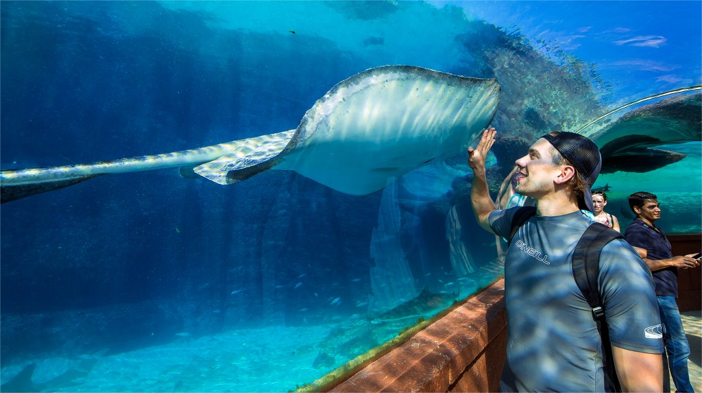 Touching a stingray! Atlantis photos by Lizzy Davis.