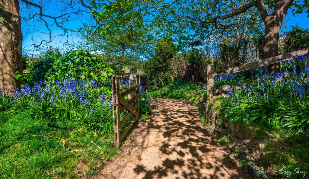 Wooden gate surrounded by blossoming purple lilacs and vibrant green grass at Hobbiton Village.