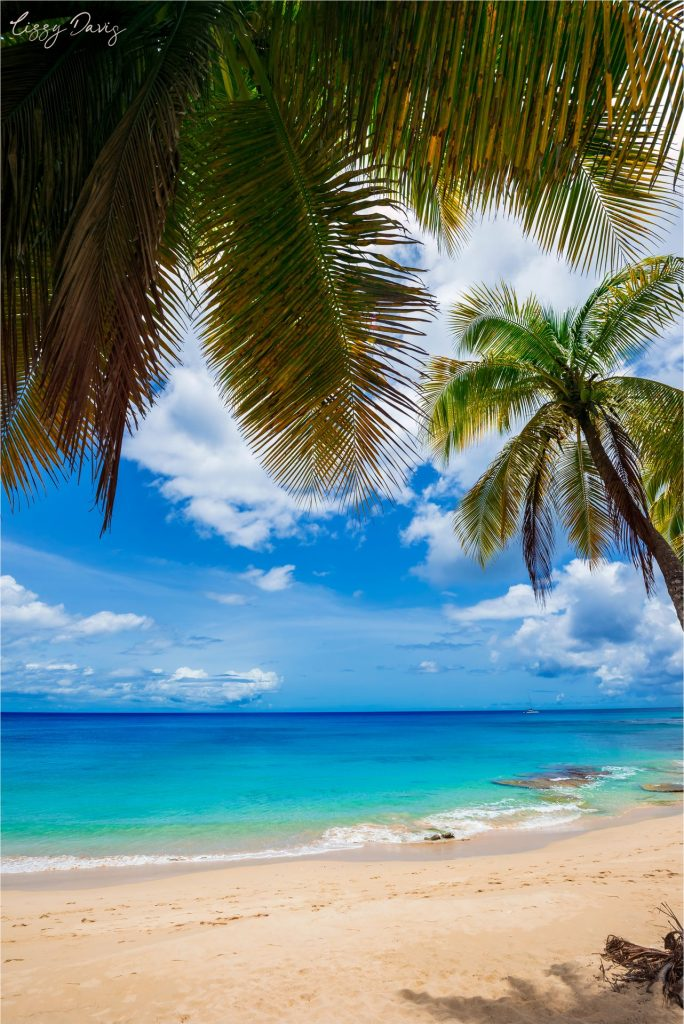 Palm trees over picturesque Mullins Beach in Barbados.