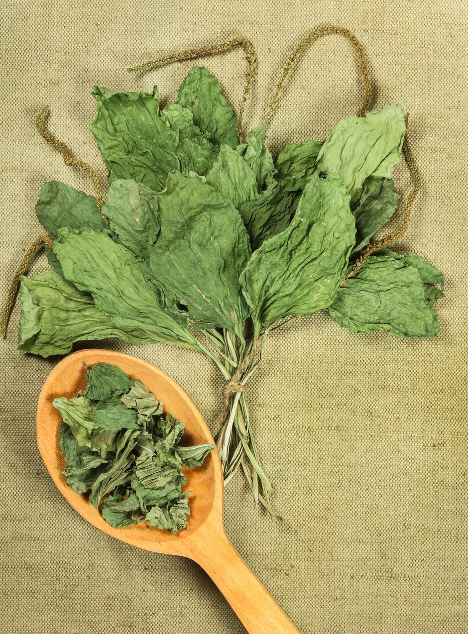 Plantain. Dried herbs. Herbal medicine, phytotherapy medicinal h   Autor: Dreamstime