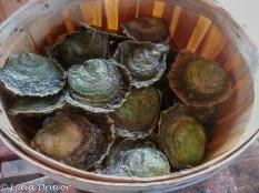 Svenska ostron, förvarade med platta sidan uppåt håller de sig fräscha.