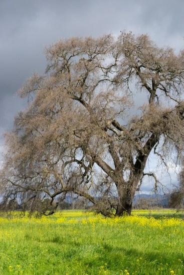old oak dsc00196 web