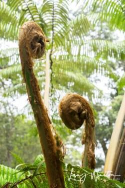 07 ferns unfolding