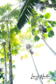 37 hikey palms