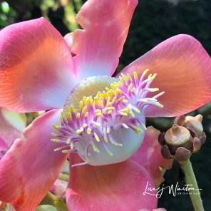 45 flower