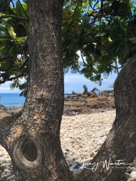 img 1184lapakahi beach dragon