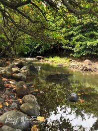 img 1445fresh water spring keokea park