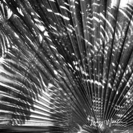 img 1612bwfern shadows on palm
